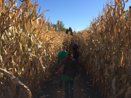 It's fun getting lost in a corn maze!