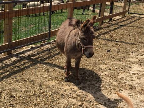 Maria the donkey