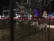 Reindeer!!!