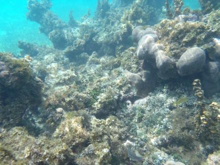 The underwater